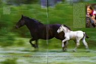 Kurier Freizeit, February 2006, on the Last Mustangs in Canada by Patrice Halley